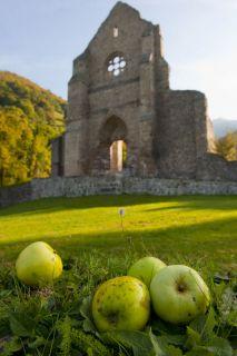 11e-pommes-136